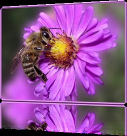 Vign_abeille-sur-fleur