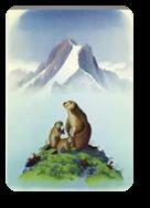 Vign_marmotte